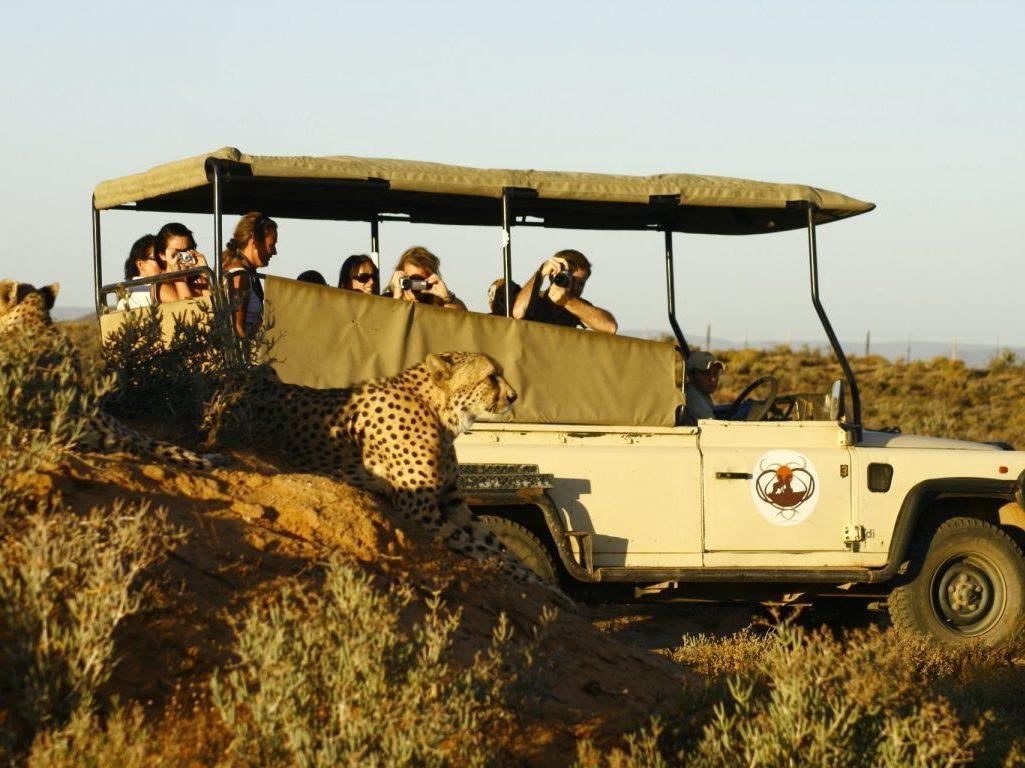 Cheetah on Inverdoorn Private Reserve Safari