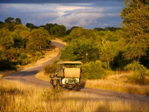 Photographic - Game drive