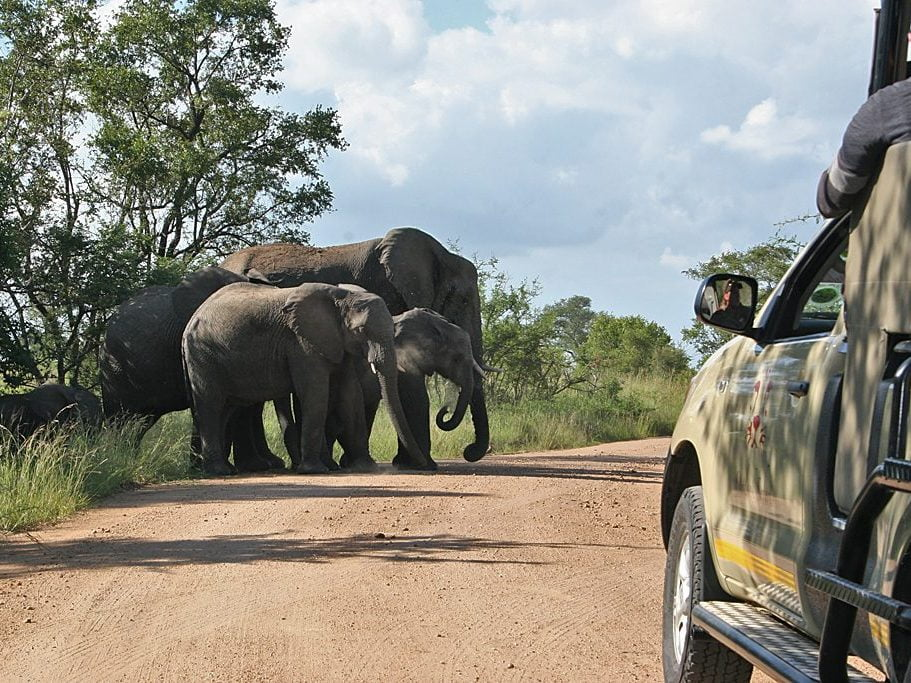 A herd of elephant cross the road on A Kruger National Park safari