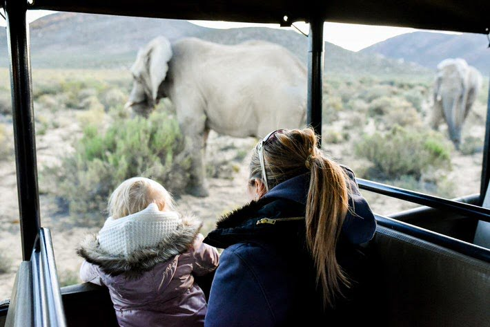 Viewing Elephants on Safari at Aquila Private Game Reserve